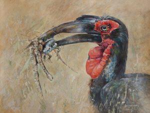 Acrylic Painting of a Ground Hornbill
